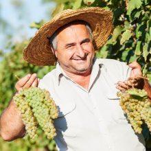 Čo pre víno môže urobiť štát, čo je na vinohradníkoch a vinároch? (6/6)