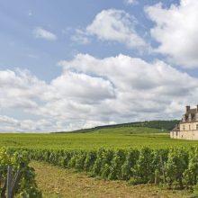 Francúzske vína – orientujete sa v nich?