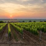 slovenské víno Tajna