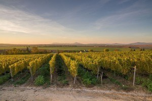 vinárstvo Tajna bio vinohrad