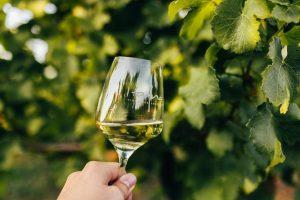 rizling vlašský Tajna biele víno