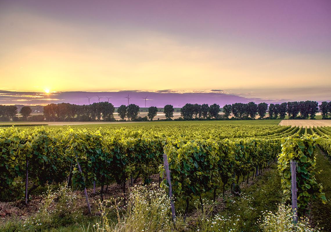 vinohrady-vinarstvo