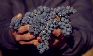 kvalitné víno Tajna