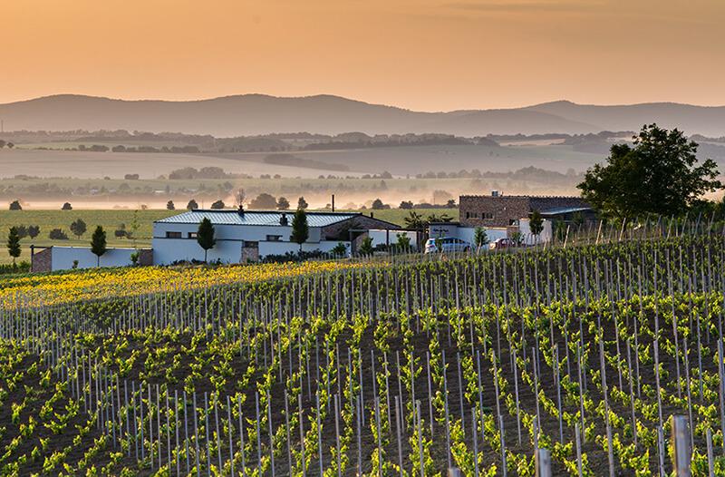 vinohrady-Tajna