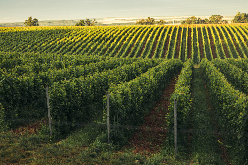udrzatelnost ekologia vinohrady