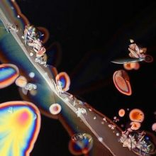 Záhadný svet vína pod mikroskopom. Neverili by ste, čo uvidíte
