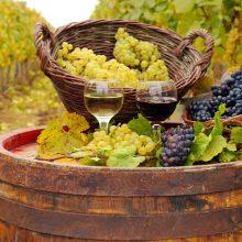 Malý ťahák pre vinárskych laikov
