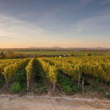 Bio vinohrad – tajomstvá vinohradníctva v Tajnej