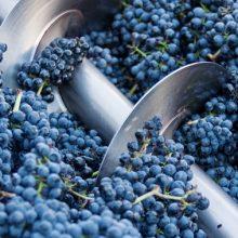 Ako procesy výroby vína ovplyvňujú víno