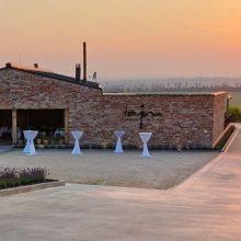Vinárske pohromy – pred čím musí vinár chrániť budúce víno