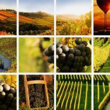 Myslíte si, že organické víno je naozaj organické?