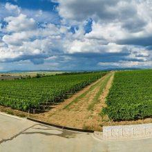 Vinohrad – odrody a terroir