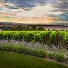 Veda za vínom – vyrobiť veľké víno je umenie