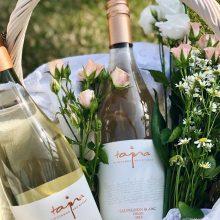 Biele odrody: Sauvignon Blanc