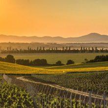 Víno, hrady, fauna aflóra – okolie vinárstva Tajna má návštevníkom čo ponúknuť